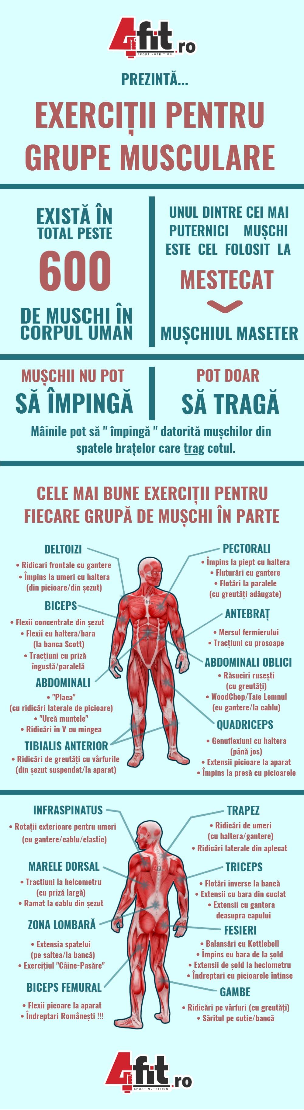 Exercitii pentru grupe musculare